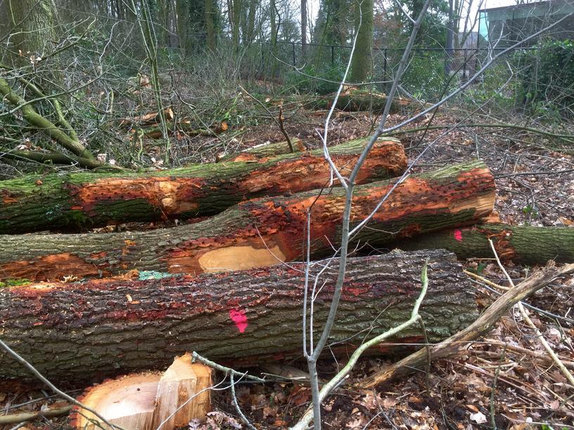 Bossen uitdunnen